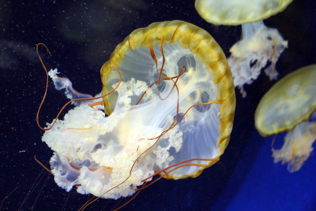 Image Result For Sea Life Minnesota