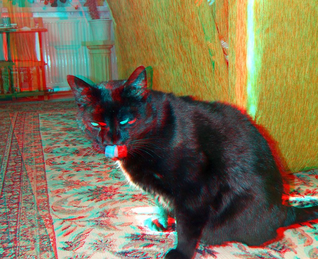 3D Red/cyan Anaglyph - Schwarzer Kater / Black Cat