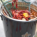crawfish boil pot