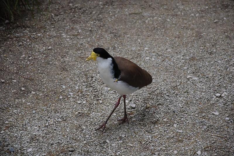 Nuestro pájaro amigo