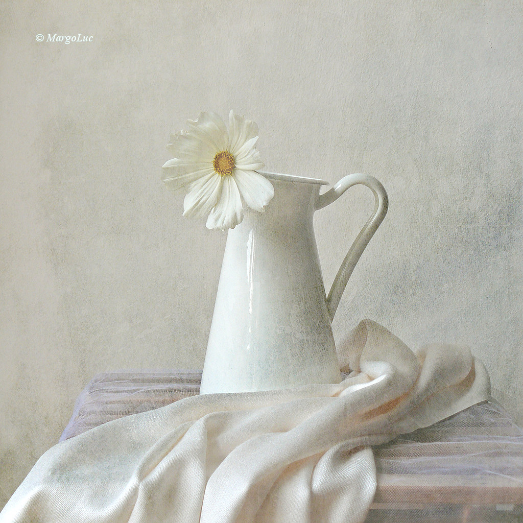 Still Life With White Flower