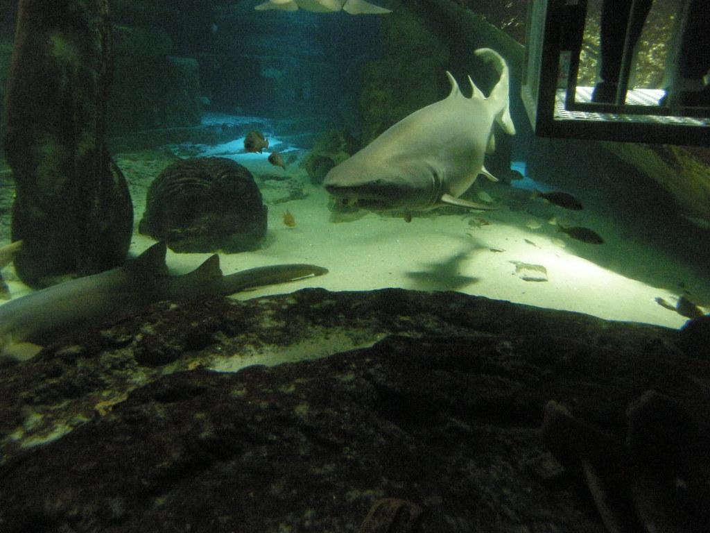 Image Result For Long Island Aquarium