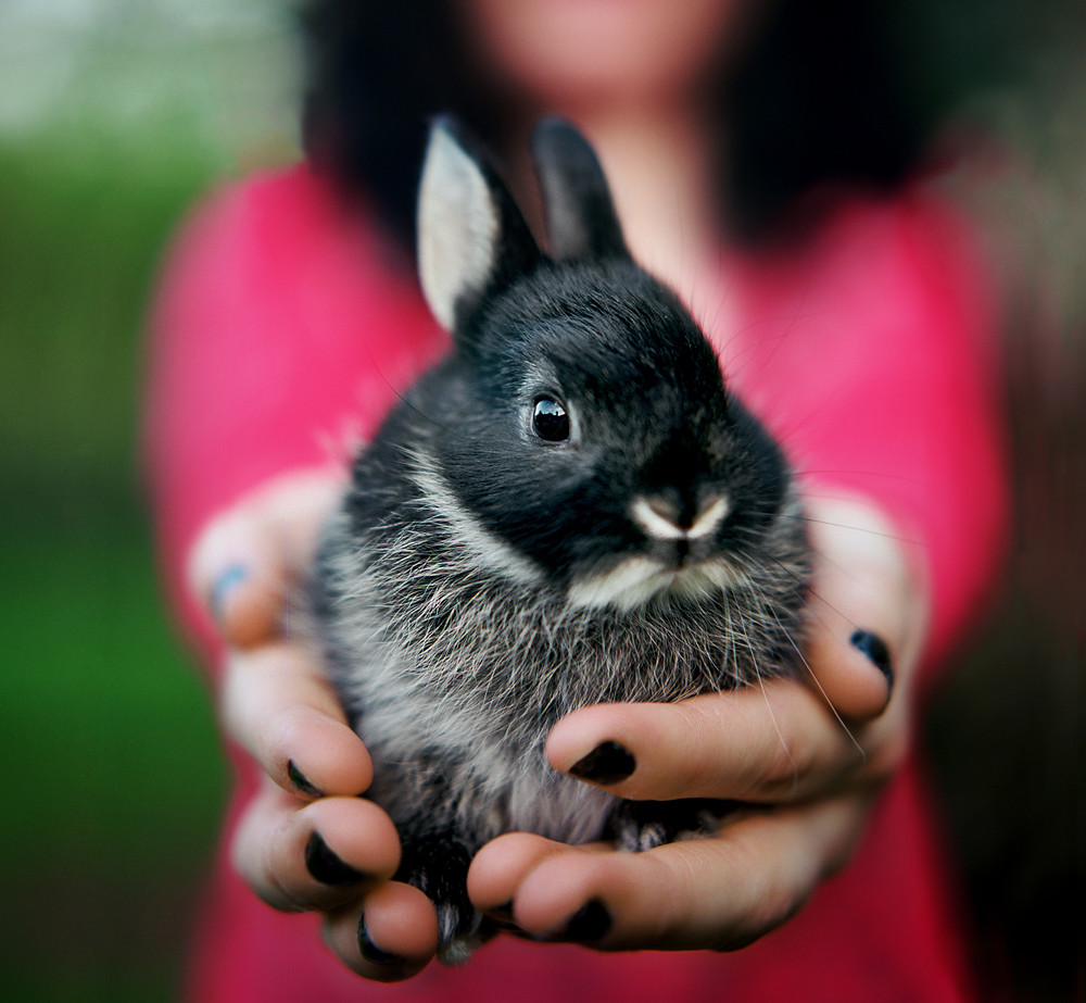 backyard bunnies: hasselblad study #1