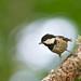 Workshop de Fotografia da Biodiversidade de Vila Real