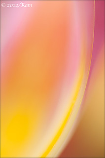Tulip Abstract | by Floral Colors