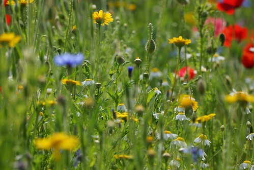 Meadow mixture | by SteveJM2009
