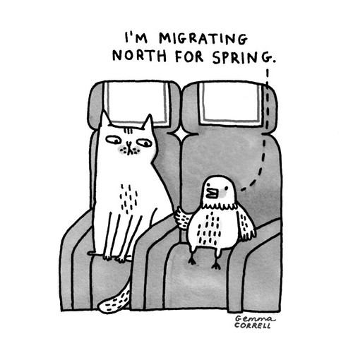 Sky Cats - Animals | by gemma correll