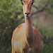 Africa Safari 004