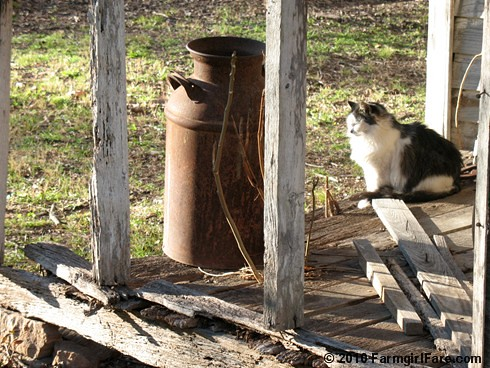 Smudgie on the Old Porch | by Farmgirl Susan