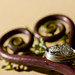 fiddleheads.  ring shot.  pretty.