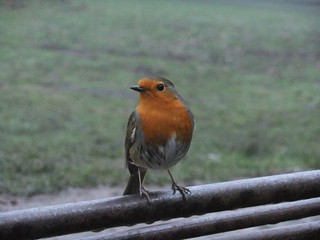Robin on a Rail | by LornaJane.net