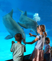 Children interact with Atlantic bottlenose dolphins