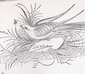 Bird Flourishes Advance Victorian Calligraphy 1886 Flickr