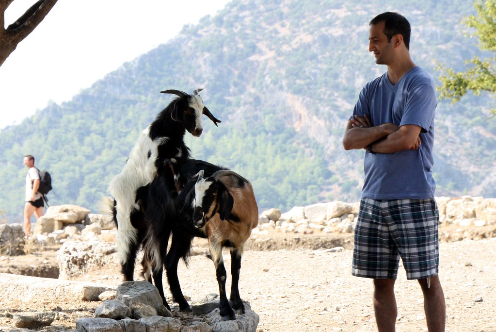 Dave And Goats In Kaunos  Goats Having Sex Dave Watching -4547