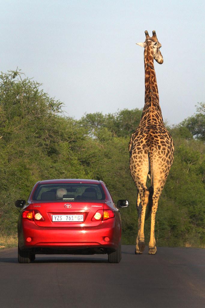 Http Www Africasafari Com Sita Tours Cfm Source Cruisemm