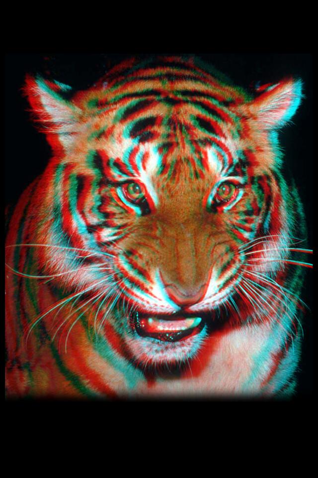 wallpaper iphone 3d tiger: Iphone 4 - 3D Wallpaper - Tiger - 640 X 960