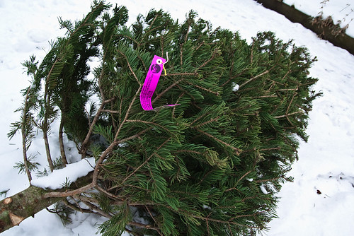 Thrown Out Christmas Tree Curb January 13, 20111 | by stevendepolo