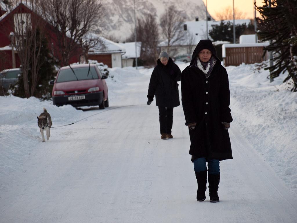 Dog Walking Winter Essentials To Stay Warm Leash