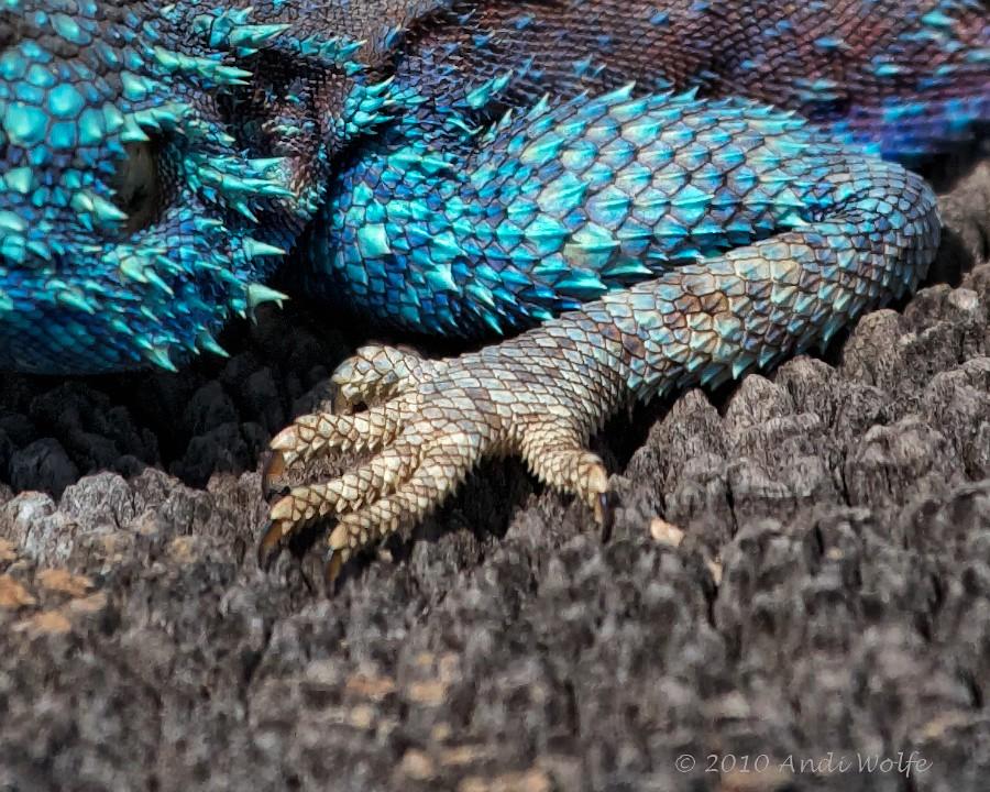 Detail Of Lizard Scales  Anysberg I Love