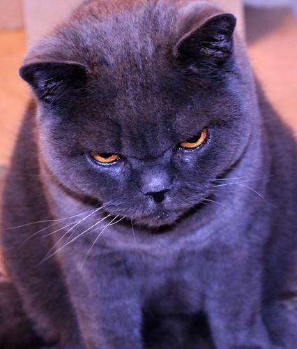 Annoyed Animals