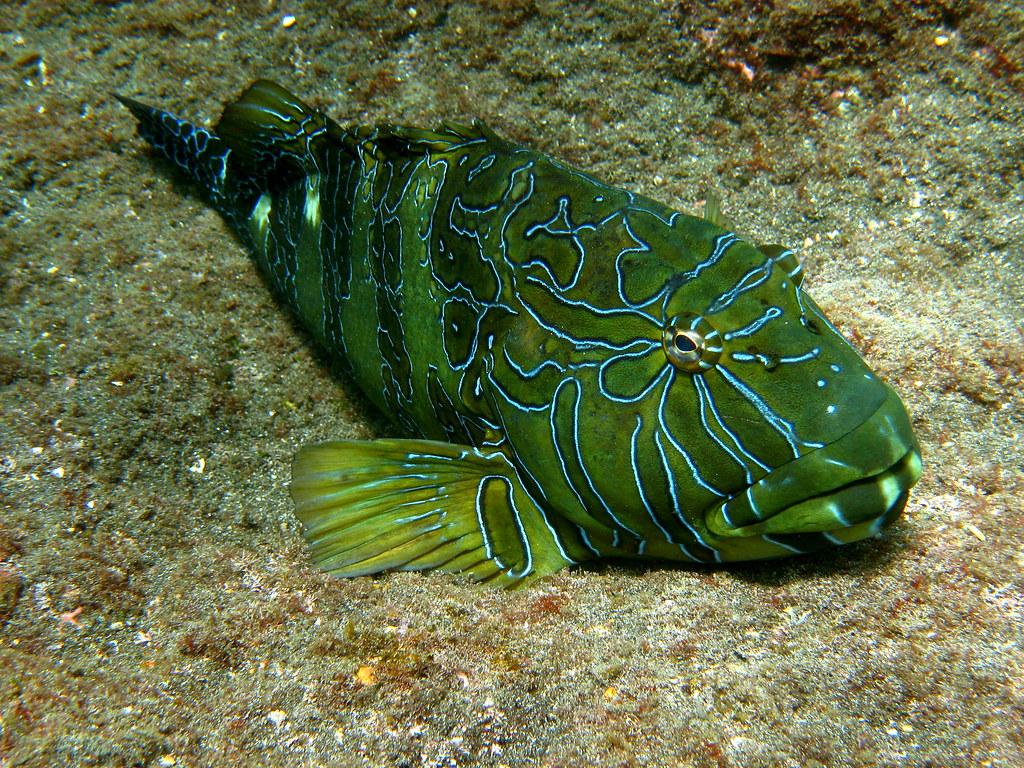 Galapagos Islands: Galapagos Wildlife: Underwater: Very un… | Flickr