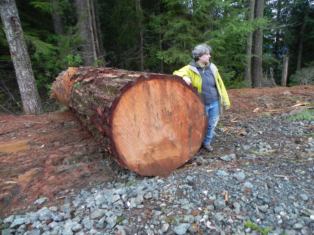 big old trees were cut here a log left in the coquille. Black Bedroom Furniture Sets. Home Design Ideas