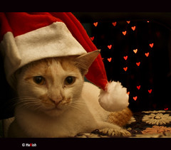 Merry Christmas !! by kenharris85