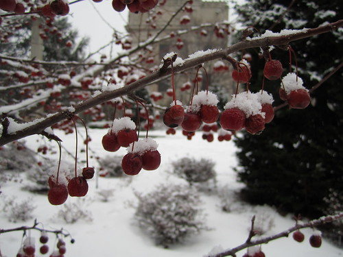 First Snow of 2011 | by Brooklyn Botanic Garden