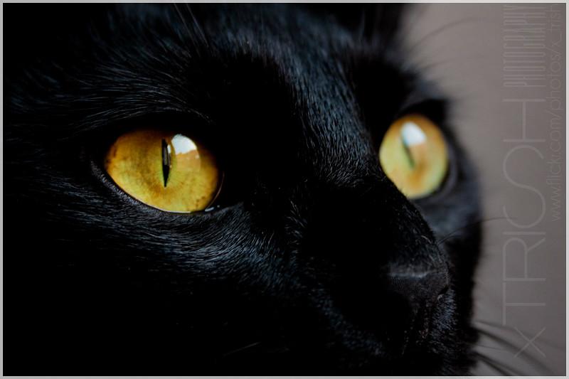 Cat S Eye Porn