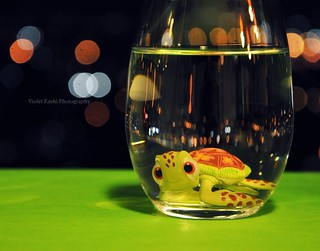 Swimming with bokeh | by Violet Kashi