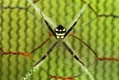 4 Legged Spider Description An Orb Weaving Garden