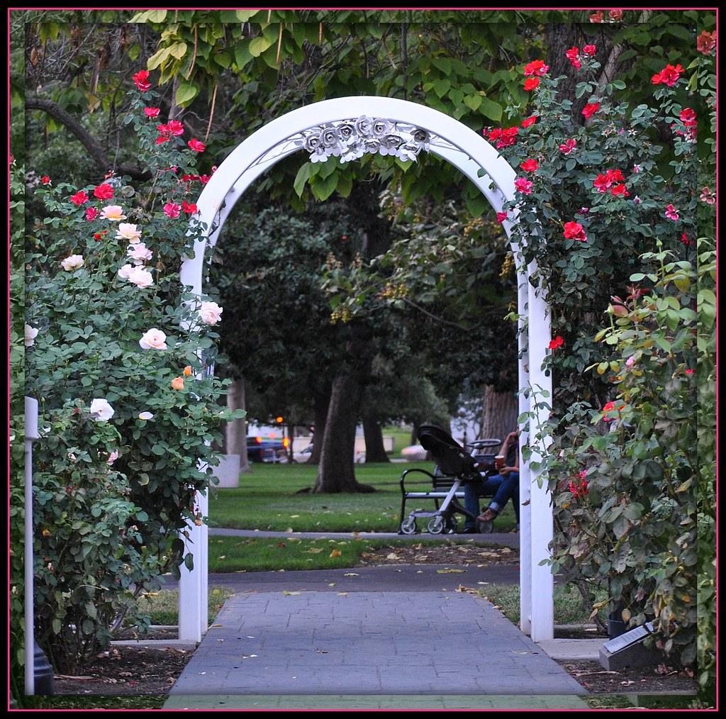 World Peace Rose Garden Capitol Park Sacramento Ca Flickr