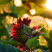Rising Sun and Sunflower by Jim Crotty