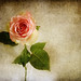 * The Rose *