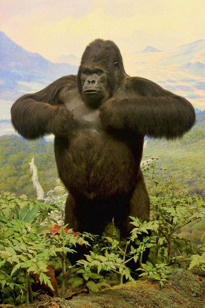 Gorilla standing up - photo#25
