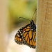 Butterfly Seek