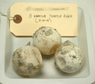 Turtle Eggs | by NOAA's National Ocean Service