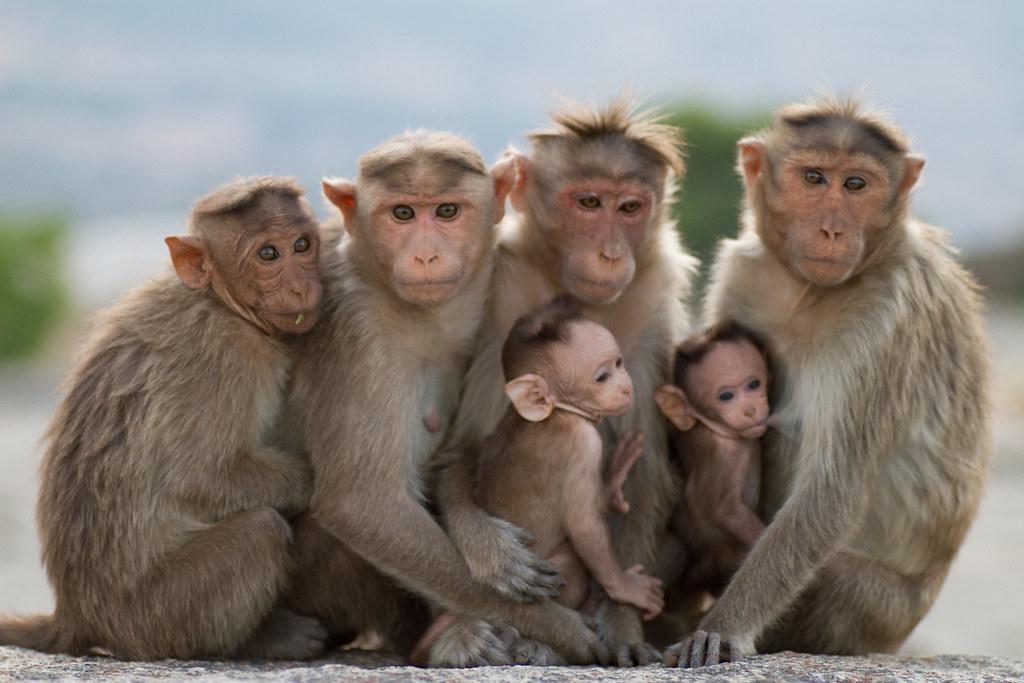 Super Monkeys | After ...