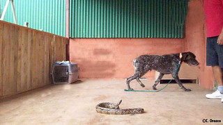 Google's snake avoidance training | by Panthera Cats