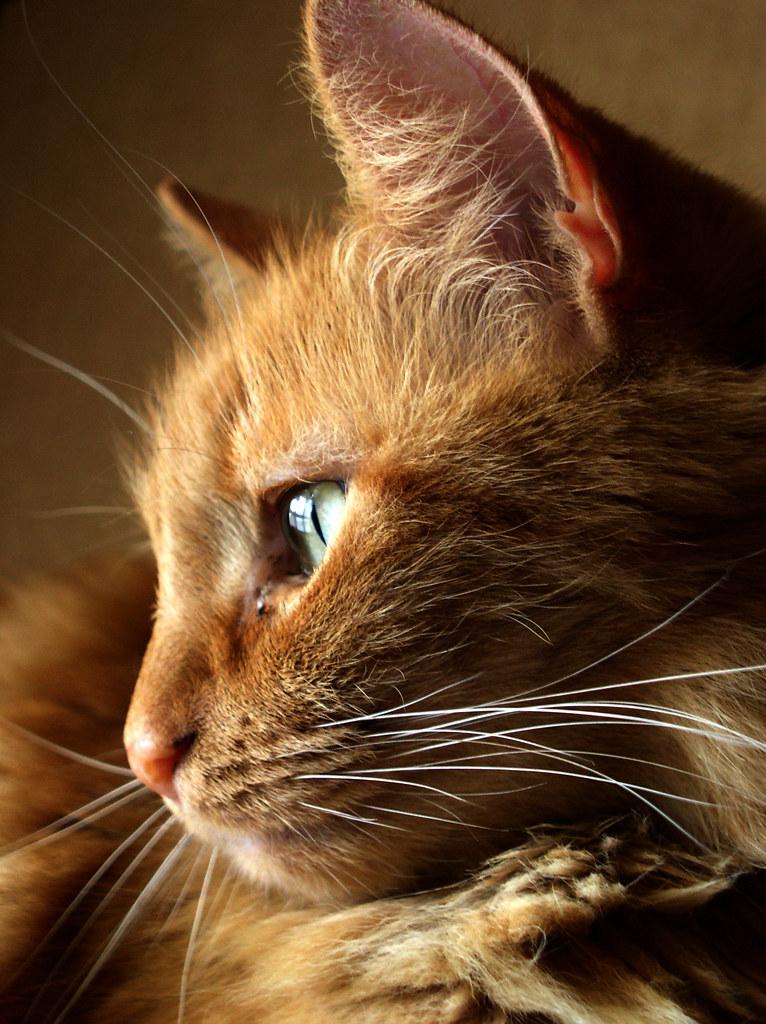 pet safe training aids