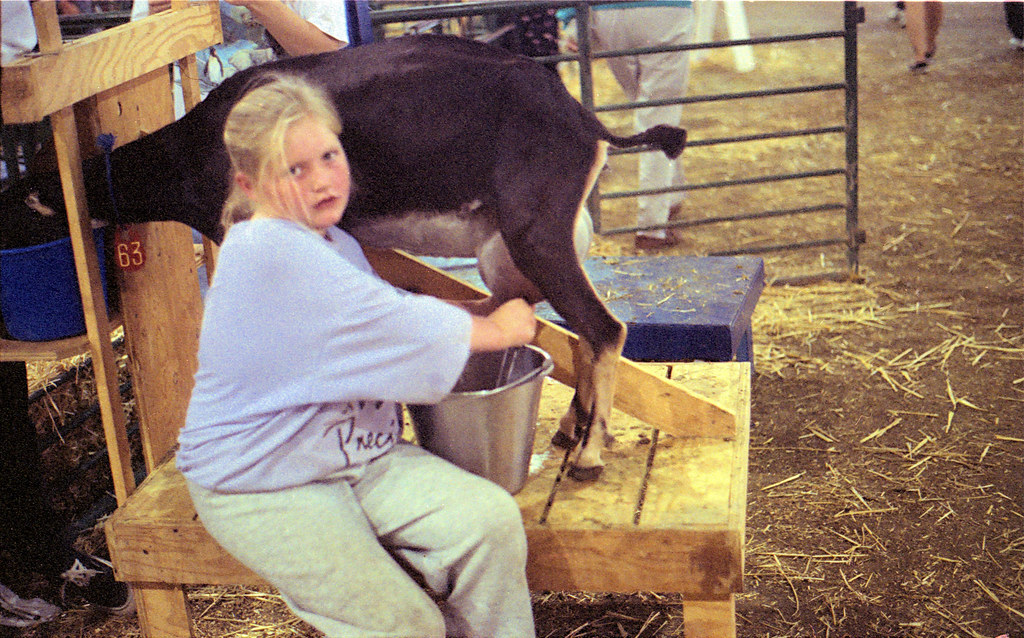 goat milking acfg 1995 girl milking a goat doe