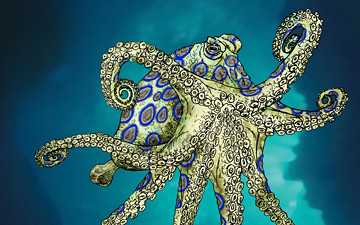 Blue Ringed Octopus Pictures Free