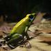 Slimy frog in Riga Zoo