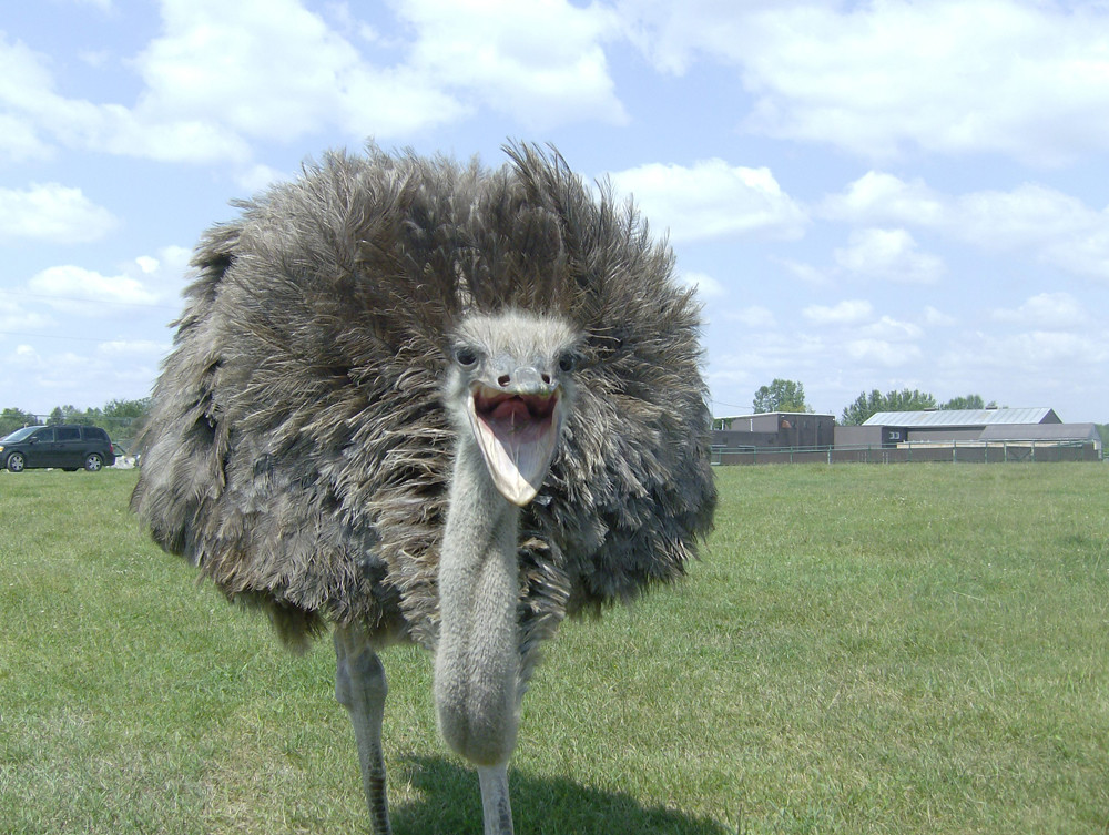 funny scary ostrich soon