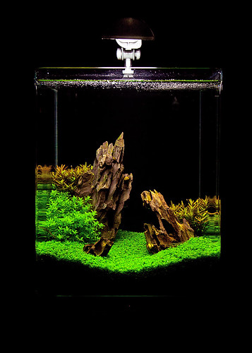 dennerle nanocube aquascaping flickr photo sharing. Black Bedroom Furniture Sets. Home Design Ideas