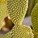 botanic-31