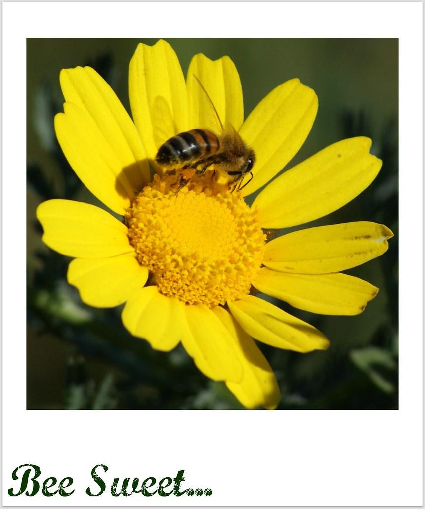 La abeja y la flor sin la abeja no hay jard n y sin for Ahuyentar abejas jardin