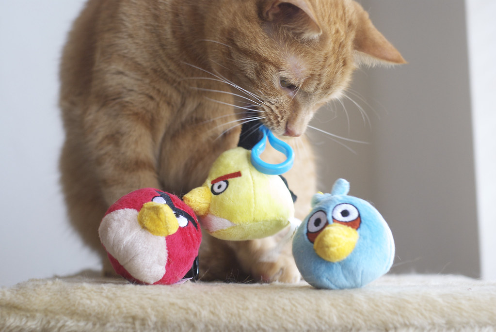Toys For Cats Pet Barn Narre Warren
