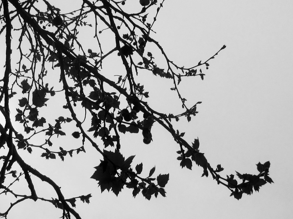 tree branches and leaves silhouette shaireproductions