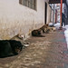 Dogs huddle for warmth in snowy Kabul
